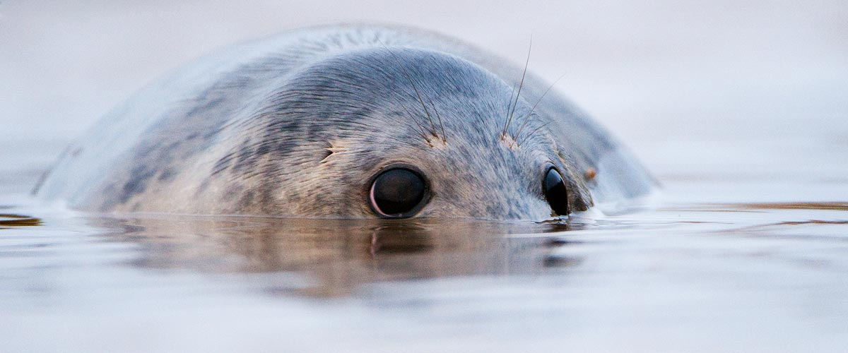 Seal Photography