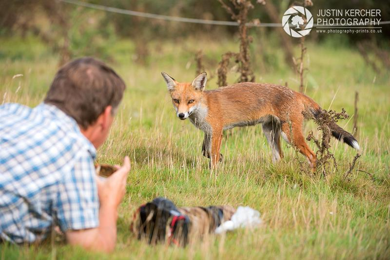 Andy Stuthbridge bonds with a wild Red Fox